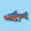 一般的な熱帯魚